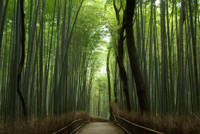 Japanese Bamboo: from delicious dish to craft decoration